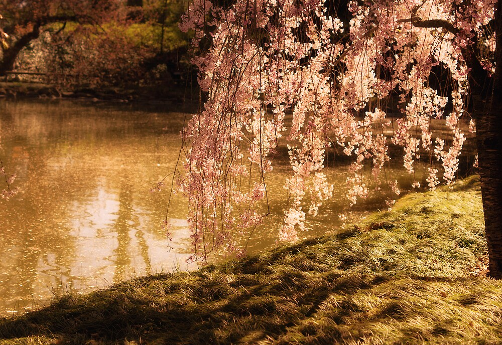 Romance - Sunlight Through Cherry Blossoms - New York City by Vivienne Gucwa