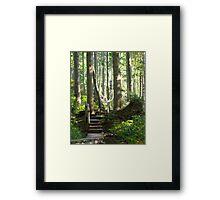 Walking among Giants Framed Print