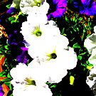 Petunias posterized by Christine Ford