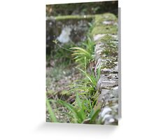 Restful Silence Greeting Card