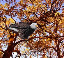 October Morning Mr. Eagle by Linda Miller Gesualdo