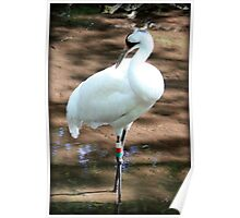 Whooping Crane 2 Poster