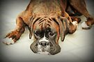 Such Is Life - Boxer Female- by Evita