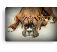 Such Is Life - Boxer Female- Canvas Print