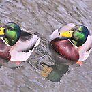 twins  ducks by deville