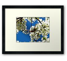 In the blink of a Butterfly's eye Framed Print
