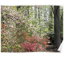 Blossoms along the Path Poster