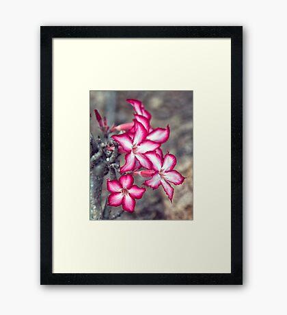 Impala Lilly Framed Print