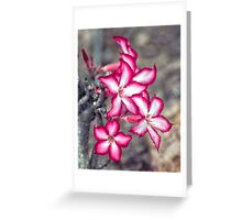 Impala Lilly Greeting Card
