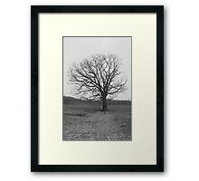 Under the Old Tree Framed Print