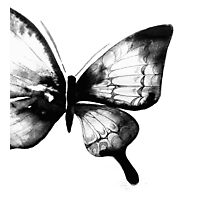 Black Watercolor Butterfly Photographic Print