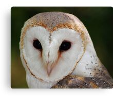 """""""Wise Owl"""" Canvas Print"""