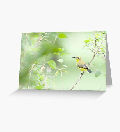 Bird in the bush - honey eater  Greeting Card