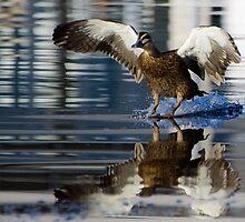 Duck Down by jesskato