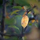 A single leaf..... by Becca7