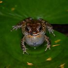 Ribbit! by Jessica Henderson