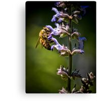 Bee #3 Canvas Print