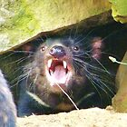Tasmanian Devil - No means NO! by cschurch