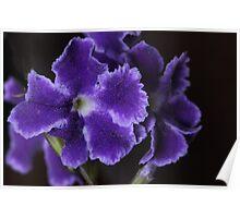 Purple Frills Poster