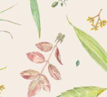 Leaf study watercolor Sticker
