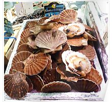 Fresh Scallops at the Marche St Germain, Paris 2012 Poster