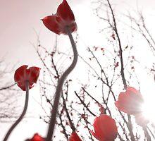 Tulips  by VisualVerve