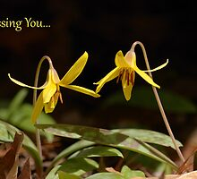 Missing You...Dogtooth Violet Notecard by Heather Pickard