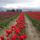 Tulips against a dark sky by Mike  Kinney