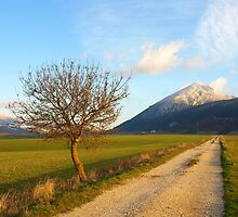 By the Road by photoshot44