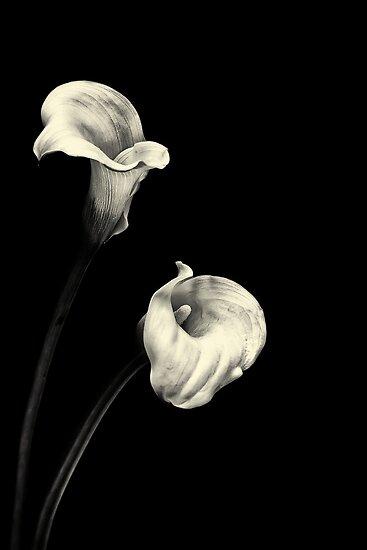Sweet Serenity... III by Bob Daalder