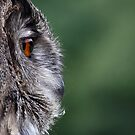 Eagleowl profile by Jim Cumming