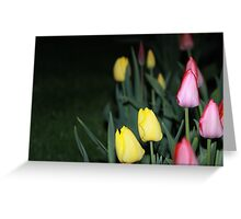 tulips and flashlight Greeting Card