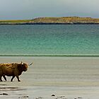 Cow on the Beach by Mark Lancaster