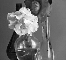 Camellias and Glass - B&W by Jay Gross