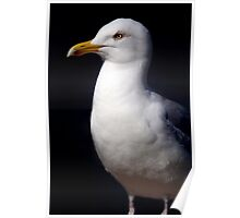 Standing Seagull Poster