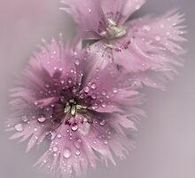 Pink Dream... by EbyArts