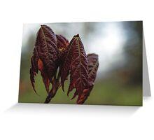 Folded Leaves Greeting Card