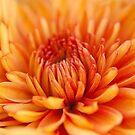 Floral Images By Susan Brown by Susan Brown