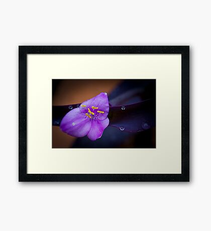 Violet & Yellow Flower Framed Print