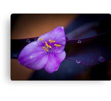 Violet & Yellow Flower Canvas Print