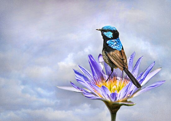 Lily Blue by Trudi's Images