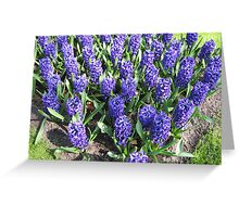 March of the Hyacinths Greeting Card
