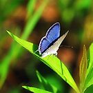 The Smallest Beautiful by Donnie Voelker