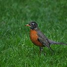 Hey Robin by Robin Lee
