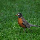 Hey Robin by Robin Lee