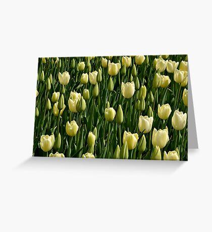 White Tulips Greeting Card