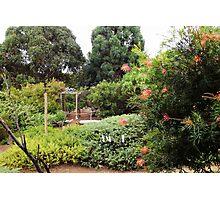 Our Garden Photographic Print