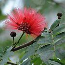 Puffy Flower by Robin Black