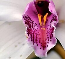 Orchid by Robin Lee