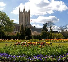 St. Edmundsbury Cathedral by Melodee Scofield